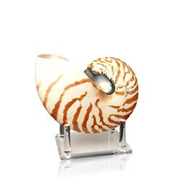 Chambered Nautilus Sea Shell With Lucite Display Stand 5 to