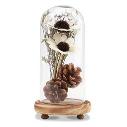 Segarty Glass Dome, Decorative Glass Cloche Bell Jar Display